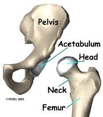 hip and pelvis